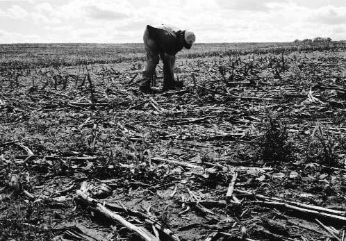 On the author s Missouri farm, soybeans emerge from the stubble of an old corn crop. His no-till farming involves a tradeoff: more chemicals but less soil erosion.