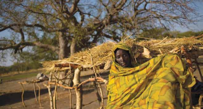 Pastoralists in East Africa are particularly vulnerable to climate change. In 2010 ECP published a monograph titled Climate Change and Natural Resources Conflicts in Africa that addressed this issue.