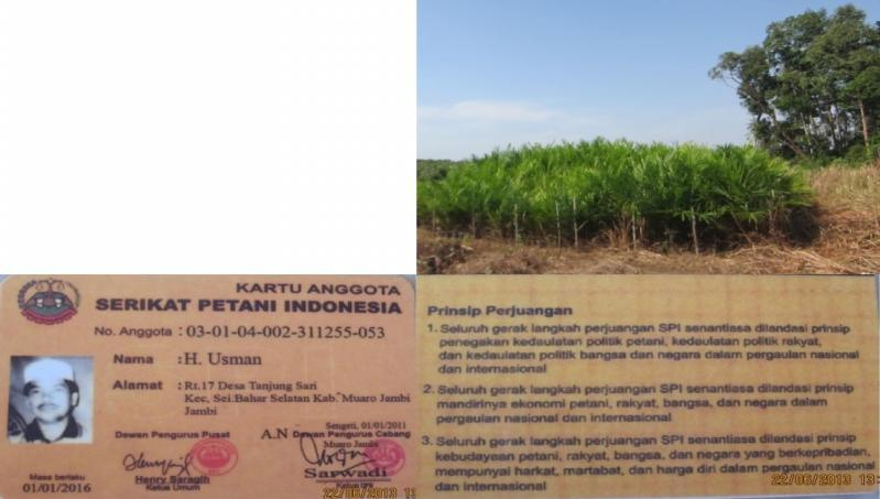 Pak Bugis Figure 37 Oil Palm Seedling and Plantation in Sei Jerat area (above), and SPI Member Card (below) R. Mardiana The peak of the SPI farmers arrival in Sei Jerat was in 2009.