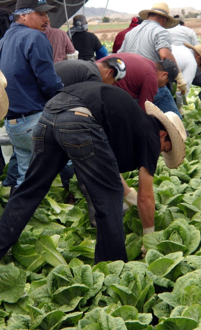 Sub-poverty wages Farm workers have the lowest annual family incomes of any U.S. wage and salary workers.