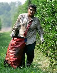 Sub-poverty wages If a farm worker is hired through crew leaders or farm labor contractors, which approximately ½ of all farm workers are, then their growers can avoid state and federallevel