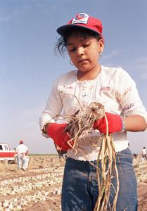 Children in the fields It is estimated that there are approximately 500,000 farm workers under the age of 18.