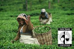 For every kilogram of Darjeeling tea sold in the Fair Trade market, producer organizations get a premium over and above the regular market price of that kilogram of