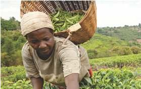 PRIVATE SECTOR DEVELOPMENT IN AGRICULTURE IMPROVED PRODUCTIVITY IN THE SMALLHOLDER FARMING SECTOR Denmark supports the promotion of growth in the agriculture sector in Zimbabwe.