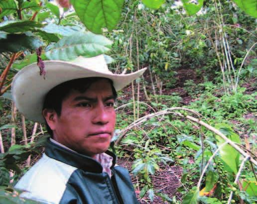 He does not trust the coyotes, the intermediaries between small coffee producers and the warehouses located in Chiapas larger cities.